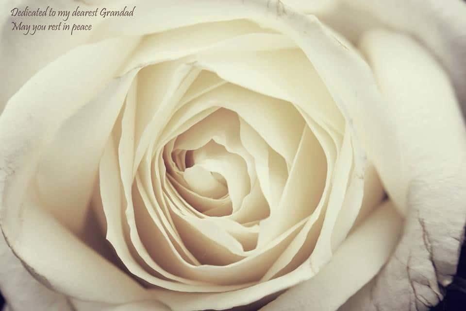 Flower dedicated to grandad