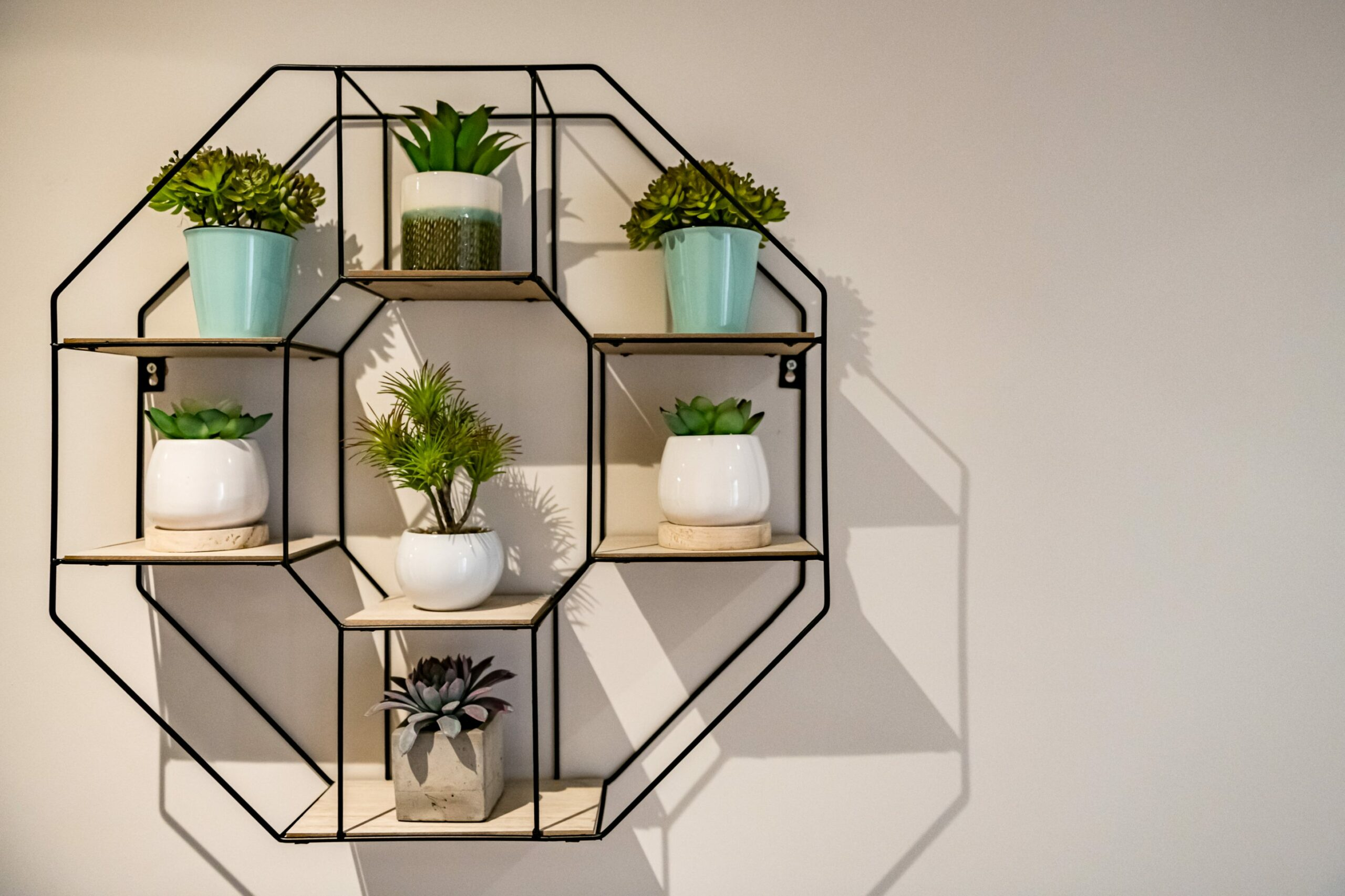 Shelving with lots of plants