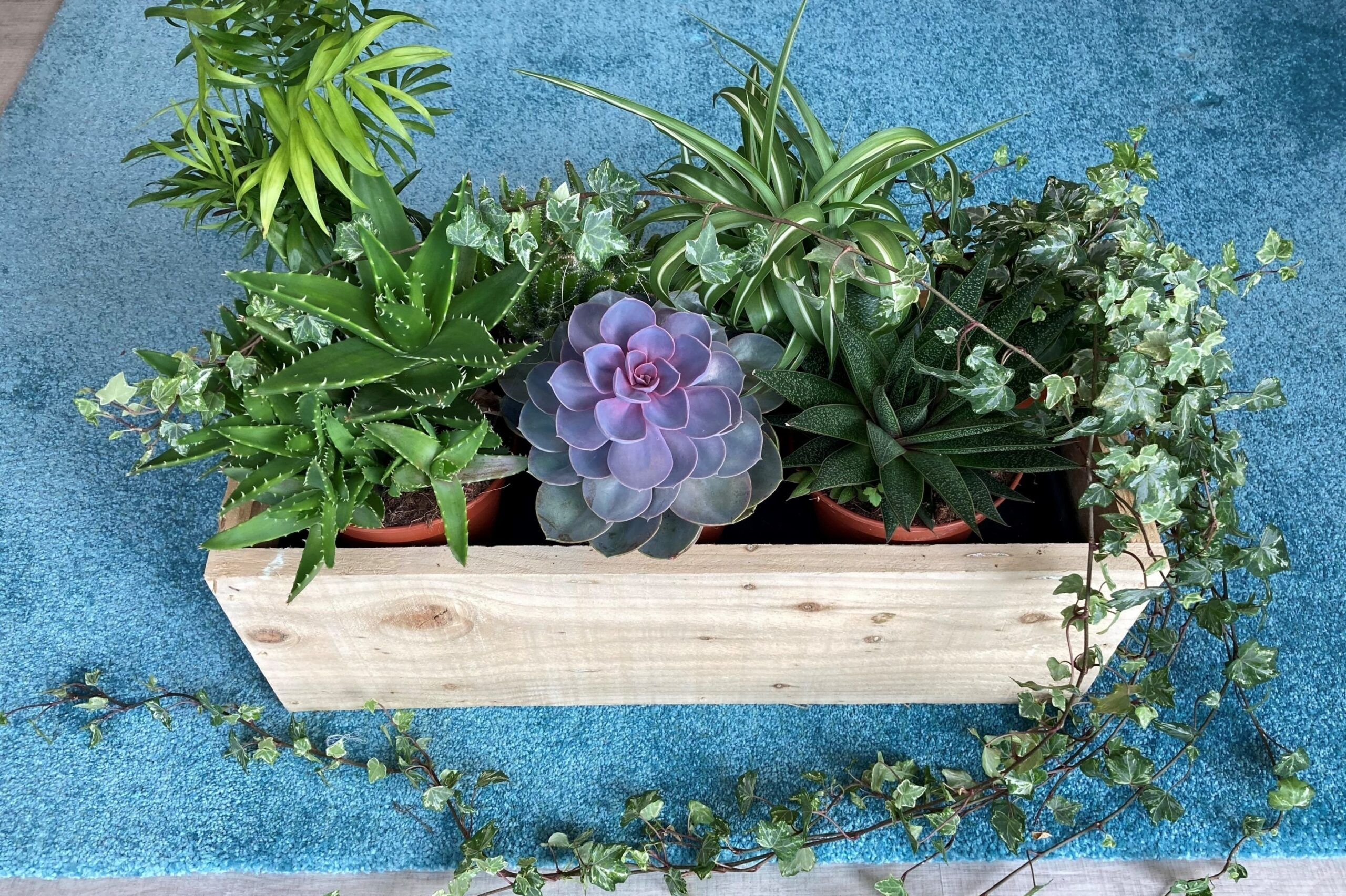 Plants in a wooden holder